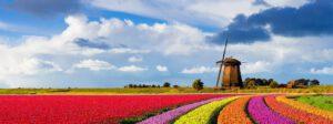 Aktualności z Holandii